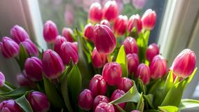 Close-up Photography of Pink Tulips Stock Images