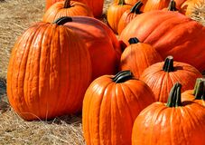 Close Up Photography of Pumpkins Stock Image