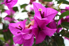Close-Up Photography of Purple Flowers royalty free stock photo