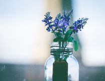 Close-Up Photography of Purple Flowers in Clear Glass Vase Stock Photography