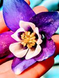 Close-up Photography Of Purple Petaled Flower Stock Photography