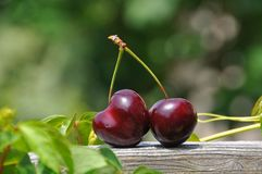 Close Up Photography of a Red Cherry Fruit Royalty Free Stock Photography