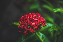 Close-up Photography of Red Flowers Stock Photography