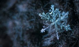 Close-up Photography of Snowflake Stock Images