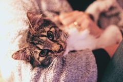Close-Up Photography of Tabby Cat Royalty Free Stock Images