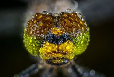 Close-up Photography of Water Dew on Green Insect Royalty Free Stock Photography