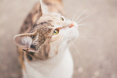 Close Up Photography of White and Brown Short Fur Cat Royalty Free Stock Photos