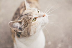 Close Up Photography of White and Brown Short Fur Cat Royalty Free Stock Images