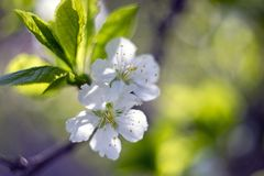 Close-Up Photography of White Flowers Stock Images