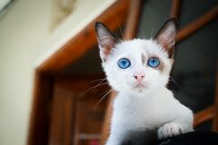 Close Up Photography of White Kitten Stock Image
