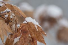 Close Up Photography of a Withered Leaf Royalty Free Stock Image