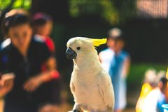 Close Up Photography of Yellow Parrot Royalty Free Stock Photos