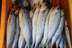Close-up photos of dried fish, food preservation, markets, shops, seafood businesses  In the Asian food market. Close-up photos dried fish food preservation stock images