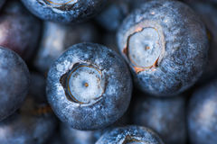 Close Up of Picked Fresh Blueberries Stock Photography