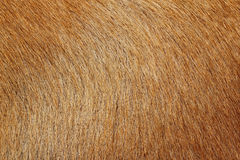 Close up picture on the animal fur, suitable as a background Stock Photography