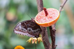 Close up picture of a beautiful colorful butterfly sitting on a flower. stock images