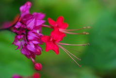 Close up picture of beautiful vivid pink color flowers. Picture with copy space. Beauty in the nature Royalty Free Stock Photography