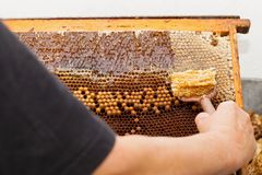 Fresh bee honey from honeycomb Royalty Free Stock Photography