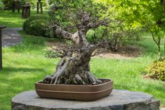 Traditional japanese garden stock photo