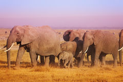 Close-up picture of elephant family in Kenya Stock Image