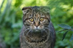 Close-up picture of flap-eared mixed breed cat`s face, green grass background stock photos