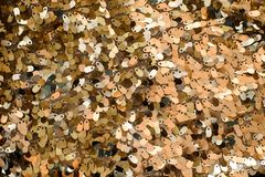 Close up picture of the glittering background of sequins Stock Image