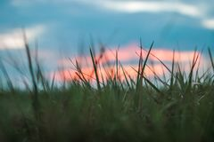 Close up picture from gras with a beautiful sunset. stock image