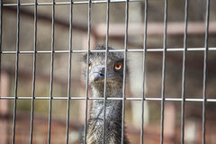 Close up picture of an ostrich head behind a fence Royalty Free Stock Image