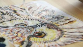 Close-up picture of owl. Close-up of the hand with a brush finishes the drawing of the bird stock video footage