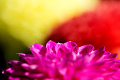 A close-up picture of a pink flower Stock Images
