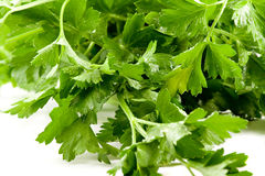 Close up picture of some fresh parsley Stock Image