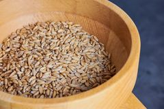 Close up picture of spelt grains in a mill royalty free stock photo