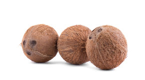 Close-up picture of three whole, fresh and brown coconuts,  on a white background. Beautiful ripe and juicy exotic nuts. Three whole, fresh, organic fruits of Royalty Free Stock Photography