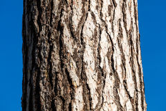 A close-up picture of a tree bark Royalty Free Stock Image