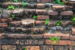 A close up picture of vintage red brick old wall in ancient ruin Royalty Free Stock Image