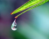 Water drops on the green leaf. Close up picture of a water drops on the green leaf that mirrored what in front of in a reversed vertically Stock Photos