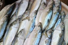 Close-up pictures of fresh fish, shops, seafood businesses in the Asian market. Close-up pictures fresh fish shops seafood businesses asian market royalty free stock images