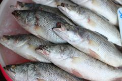 Close-up pictures of fresh fish, shops, seafood businesses in the Asian market. Close-up pictures fresh fish shops seafood businesses asian market stock image