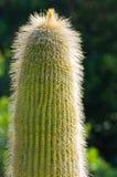 Close up of a picturesque cactus plant at botanical garden in Cagliari, Sardinia Stock Images