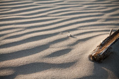 Close up of piece of tree branch on a windy wavy sandy beach. Wooden tree branch on a sandy beach texture royalty free stock photography