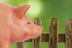 Pig farm Stock Image