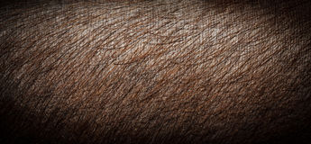 Close-up pig skin.Brown pig skin. Stock Photography