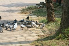 Pigeons groups in the park stock photos