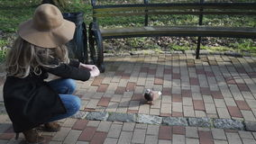 CLOSE UP: pigeons running around young woman. Girl feeding. Animals taking food from human hand. A girl in a coat and a brown hat with wide brim stock video