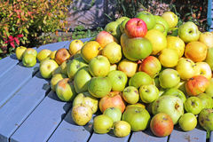 Close up of a Pile of apples on a table top. Royalty Free Stock Images