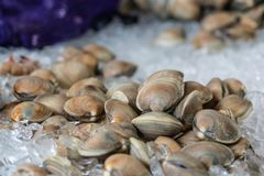 Clams on ice at the market. Close up of a pile of clams on ice at the market stock images
