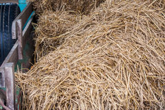 Close up pile of dry straw on truck at countryside. Stock Photos