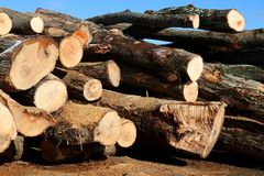 Close-up of a pile of hardwood logs with blue sky. Closeup of a pile of hardwood logs with blue sky in behind stock image