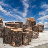 Timber logs with cloud and sky. Royalty Free Stock Photo