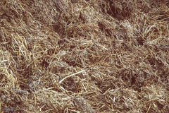 Close up of pile of manure in the countryside. Detail of heap of dung in field on the farm yard. Village background. Traditional rural scene. Slovak landscape Stock Images
